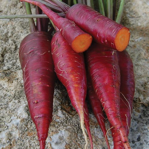 500 Seeds Purple Carrot Vegetable Seeds Carrot Seeds